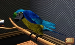 The Sims 3 Pets: Birds