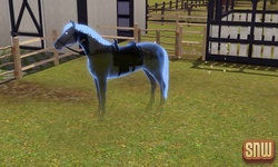 The Sims 3 Pets: Estela Marshall the ghost horse