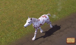 The Sims 3 Pets: GooGoo the horse