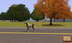 The Sims 3 Pets: Stray Dog